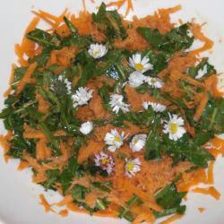 möhren löwenzahn salat mit gänseblümchen