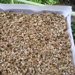selbstgemachtes granola knuspermüsli